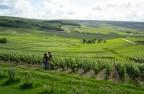 Vue sur le vignoble à Hautvillers