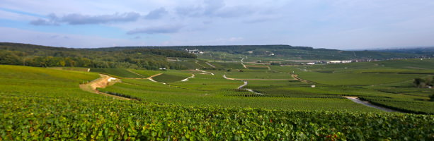 Champagne region - vineyard at Hautvillers