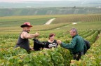 Harvest season in Champagne generally falls between September and October