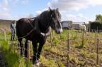 Travail du sol avec les chevaux