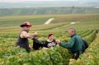 葡萄采摘季节一般会在9月和10月间