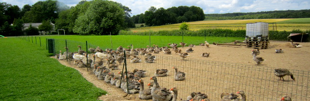 private Champagne tour foie gras farm