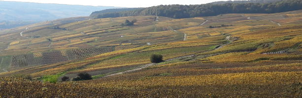 Fall in Champagne region